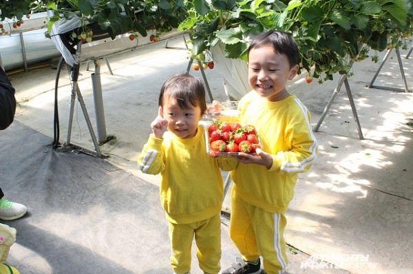 Малыши с удовольствием собирали ягоды.