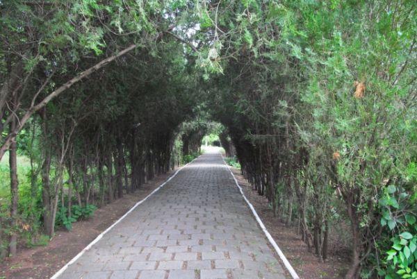 Сады и парки Болграда