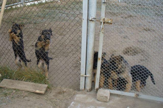 В ГУФСИН России по Свердловской области создан питомник племенных собак