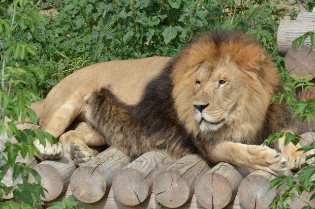 Ричард в Челябинском зоопарке