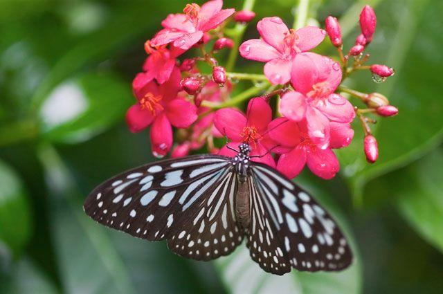 Некоторые виды бабочек занесут в Красную книгу.