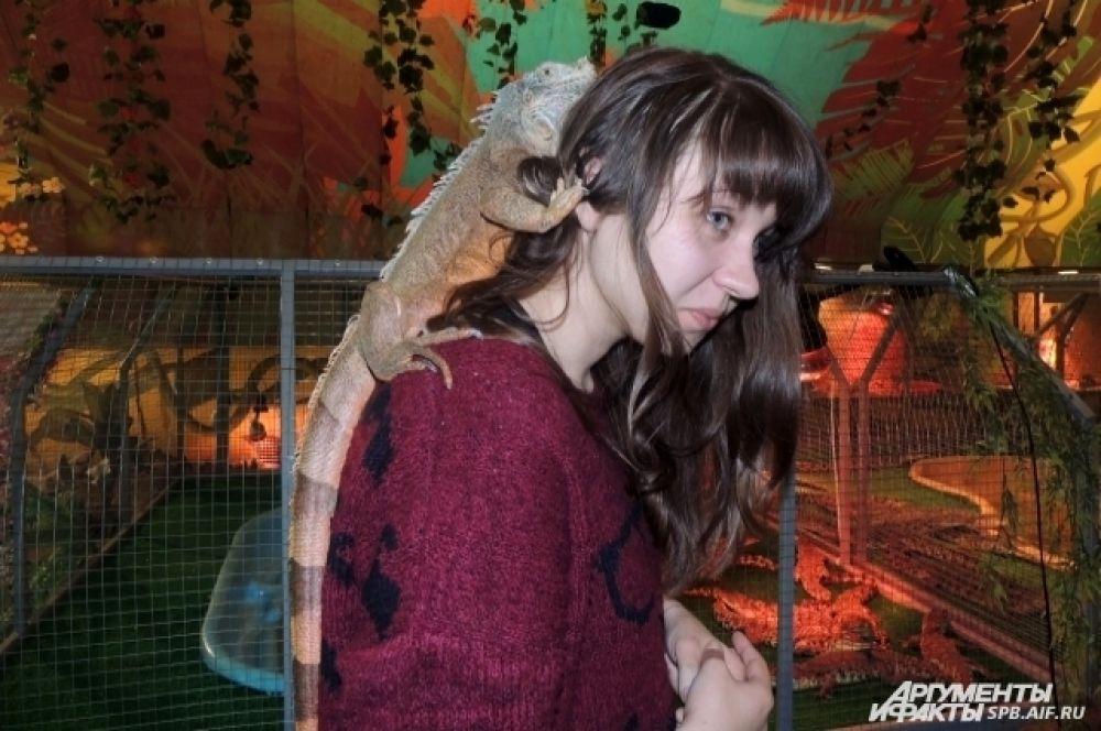 Игуана Алиса любит забираться повыше.