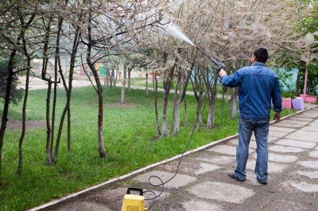 В сезонный пик активности горностаевой моли специалисты активнее обрабатывают пораженные деревья.
