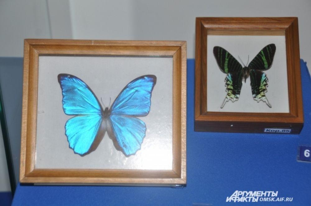 Выставка «Волшебные мгновения природы».
