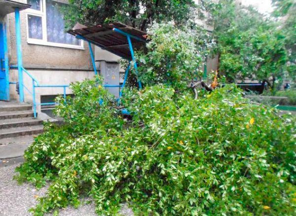 Поваленное дерево в Алуште