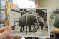 Слон Кадди была хорошо воспитана и умела показывать разные трюки.