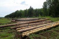 На незаконной лесоделяне задержали подозреваемого.