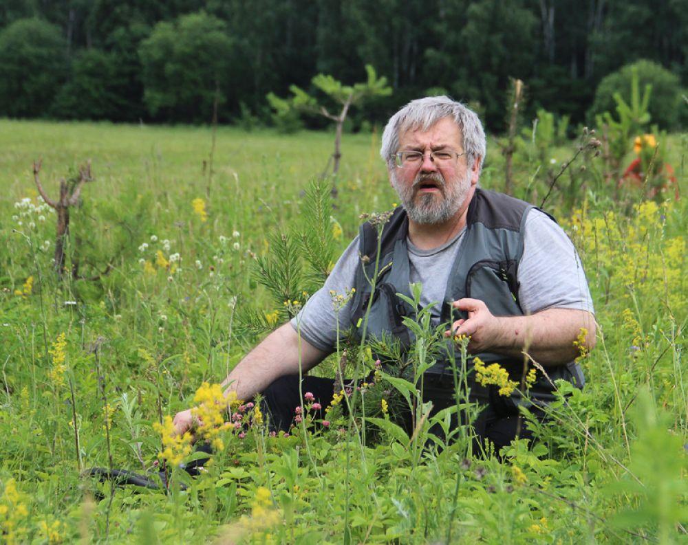 Сбор лесной клубники – не работа, а отдых.