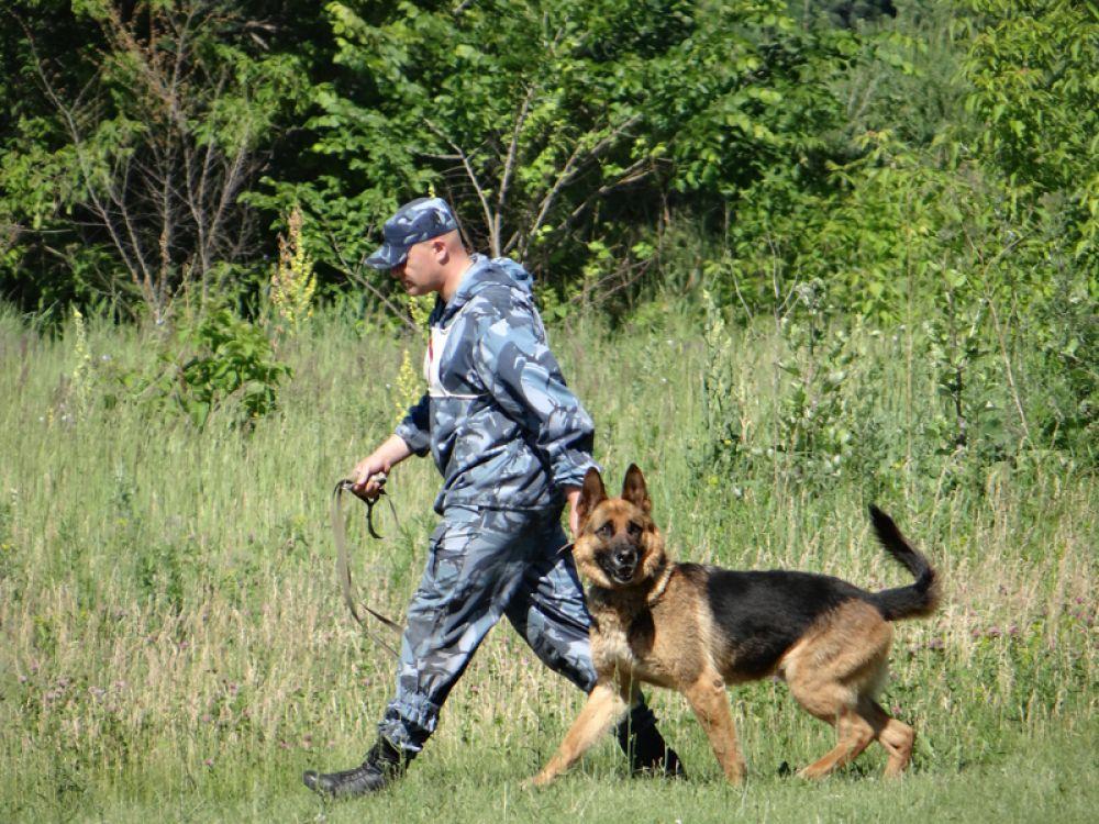 Проверяли кинологов по двум дисциплинам: общий курс дрессировки, послушание, контакт кинолога с собакой, преодоление препятствий, а также: лобовая атака, обыск транспорта, обыск объектов