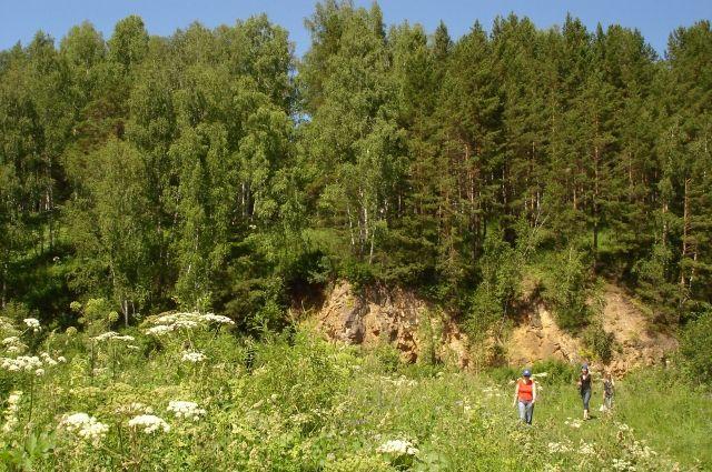 Спасатели вывели заблудившихся уральцев из леса по телефону