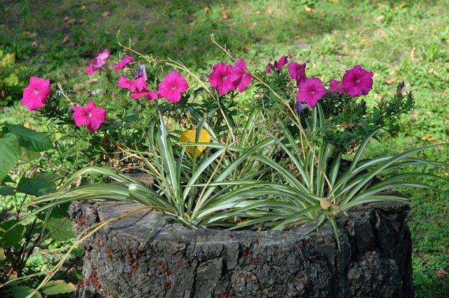 Цветы в иркутске