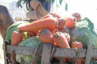 Морковь только что с грядки.