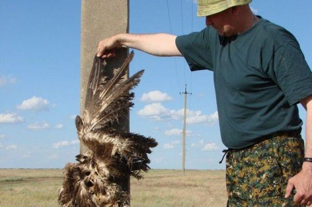 Орнитологи призывают прекратить стройку ЛЭП в природном заказнике Аргаяша