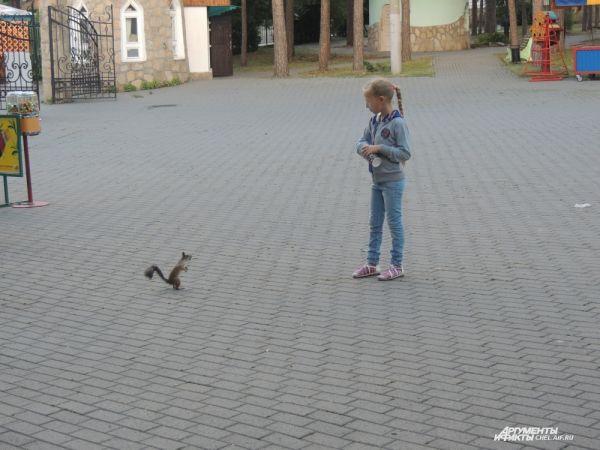 Белке так понравилась девочка, что она не отходила от нее, даже перестав получать угощения.