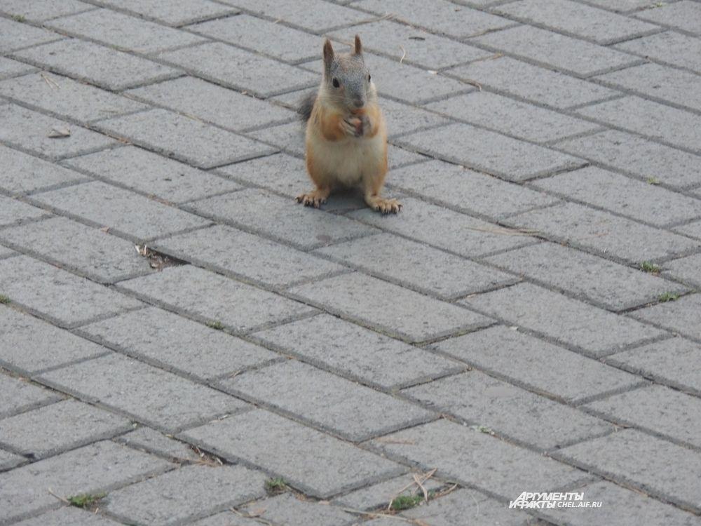 Пушистая красавица, ничуть не смущаясь, расселась посреди парка. размышляя, в какую сторону направиться.