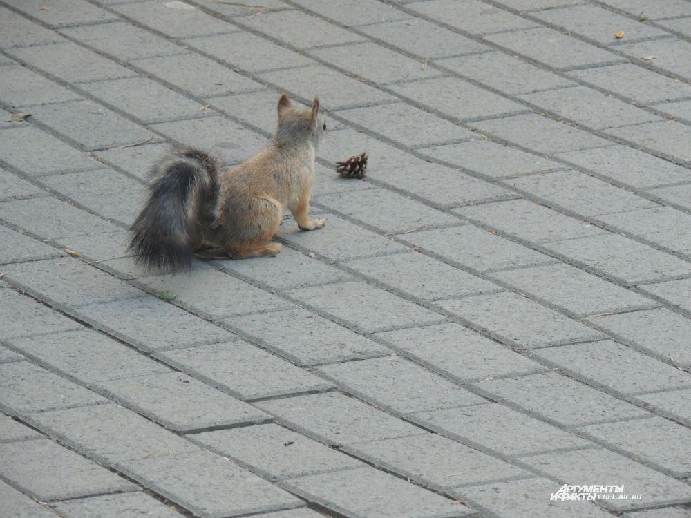 Увидев шишку с орехами, белка отошла от детей, которые пытались ее угостить, и принялась разглядывать находку.