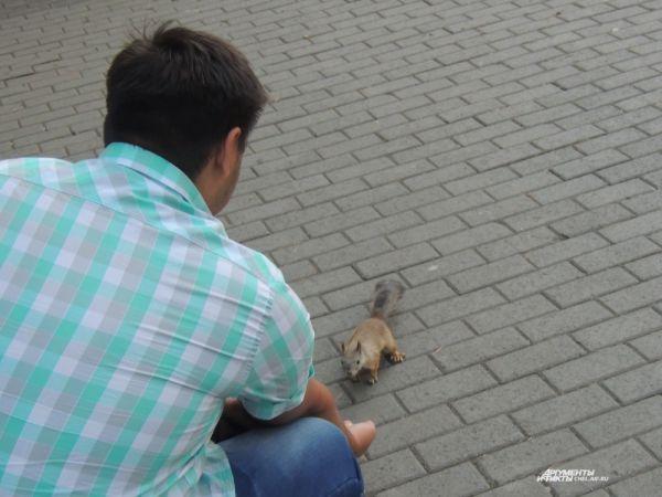 Животное совсем не боится людей.