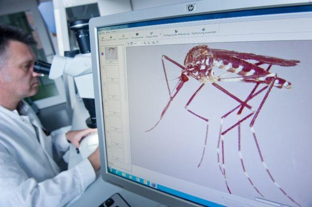 В России насекомые редко используются как потенциальные источники для разработки лекарства.