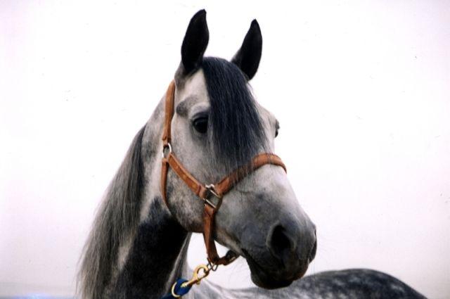 Лошадь ударила маленького мальчика копытом.