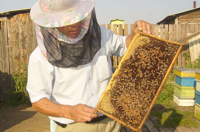 Одна семья пчелы может принести до 100 килограммов мёда в год.
