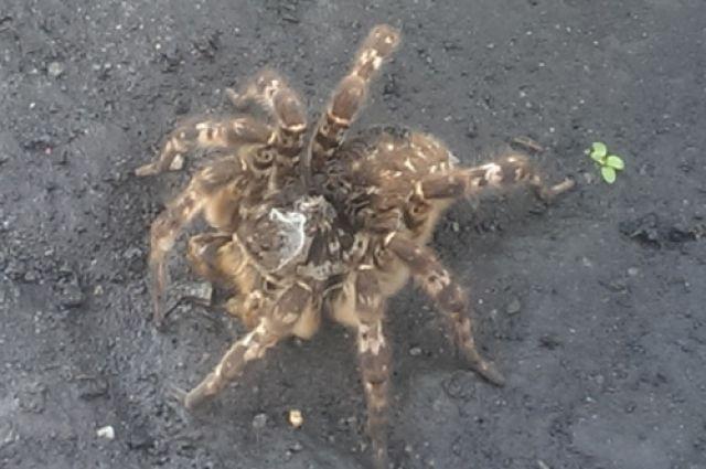 Дачники жалуются на нашествие тарантулов в Челябинской области