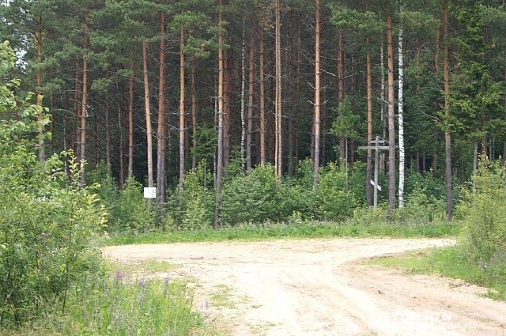 Направо - исток, налево - тропинка в деревню Дудкино.