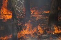 За поджог леса грозит штраф.