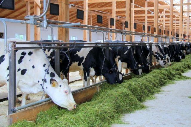 Свердловские фермеры заготовили пятую часть запасов корма для животных