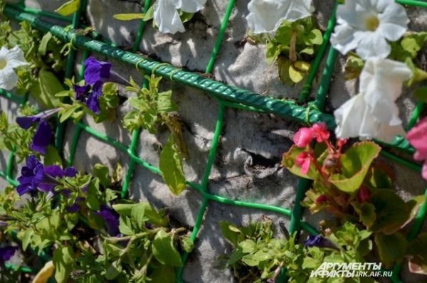 В букете растут петуньи.