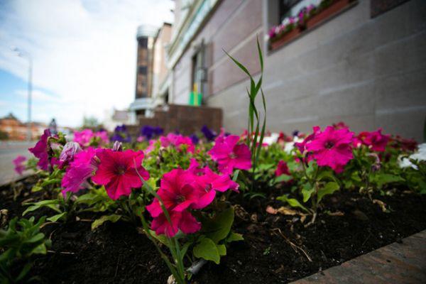 Цветочная палитра города представлена 27 видами растений. Наиболее востребованной является рассада петунии различных цветов и оттенков – 80% всех посаженных в городе цветов приходится именно на этот вид