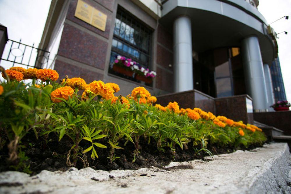 Также в Казани высаживаются сальвия, цинерария, тагетес и бегония