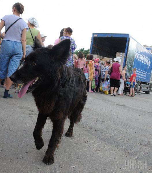 За гуманитарной помощью пришел и четвероногий житель Славянска