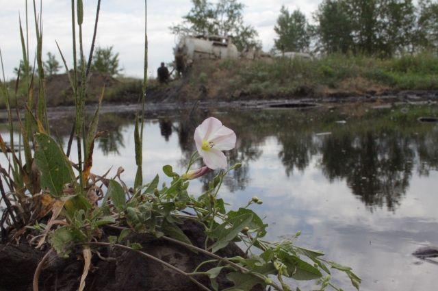 Мазутное озеро может погубить даже сорняки.