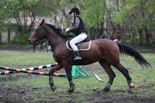 Всероссийский конный Фестиваль пройдёт в Омске.