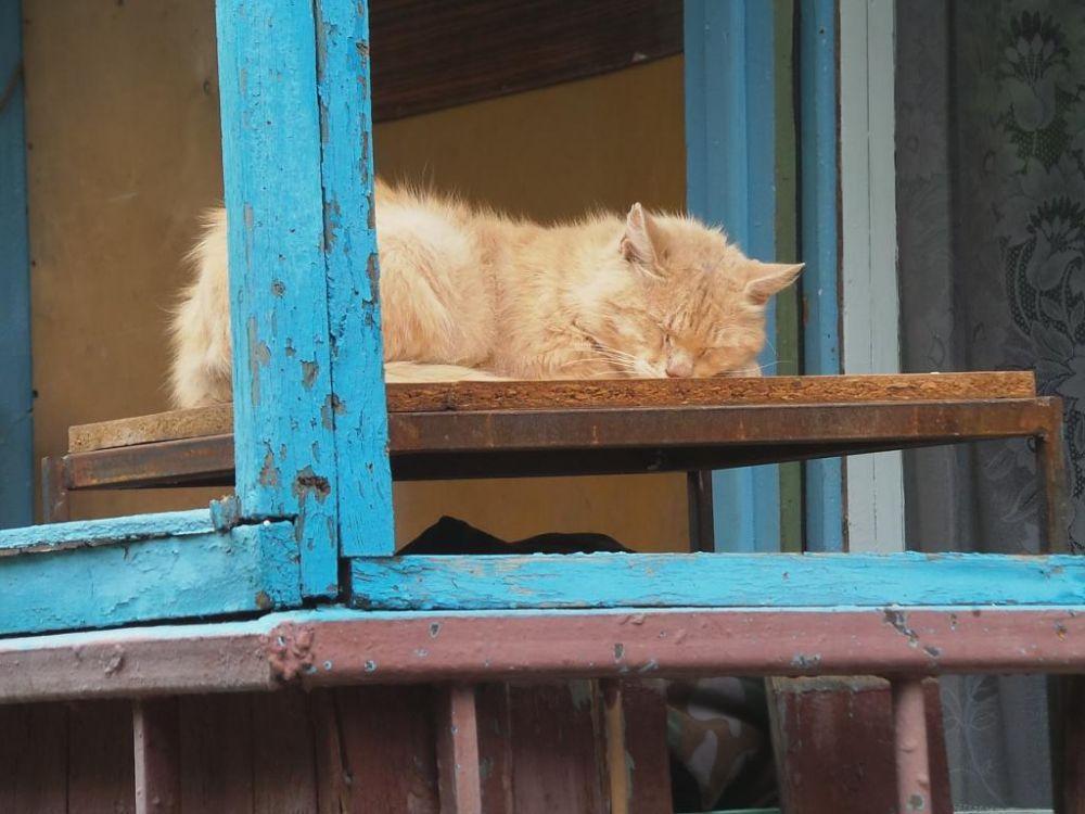 К мирной жизни в городе возвращаются и животные