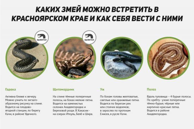 змеи краснодарского края с фото