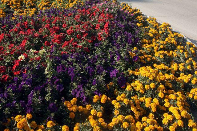 Цветочных клумб в Омске становится всё больше.