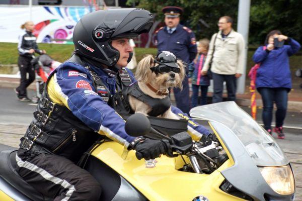 Первый в России пёс-байкер Стич из Калининграда тоже приехал на праздник.