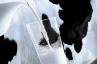 Объемы производства молока в регионе растут.
