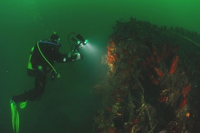 Аквалангист исследует поверхность затонувшего миноносца № 208.