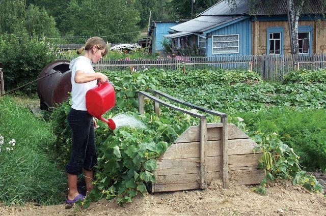 Дачники стали единственным демографическим ресурсом пустеющих сёл и деревень.
