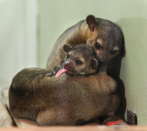 В челябинском зоопарке пополнилась «цветочных медведей».