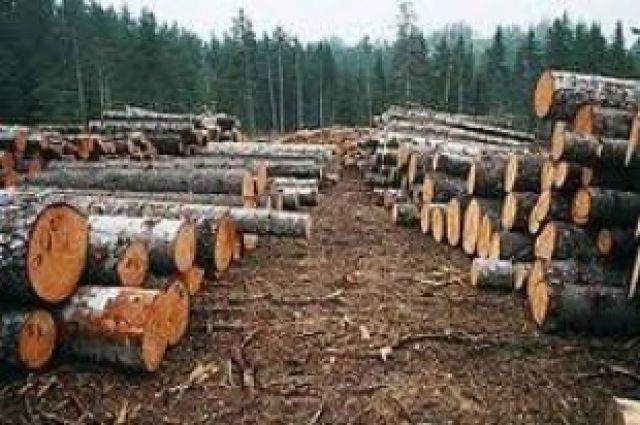 Черные лесорубы причинили Пластовскому лесничеству ущерб на 12 миллионов
