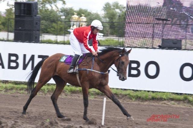 Фестиваль определил лучших лошадей и наездников.