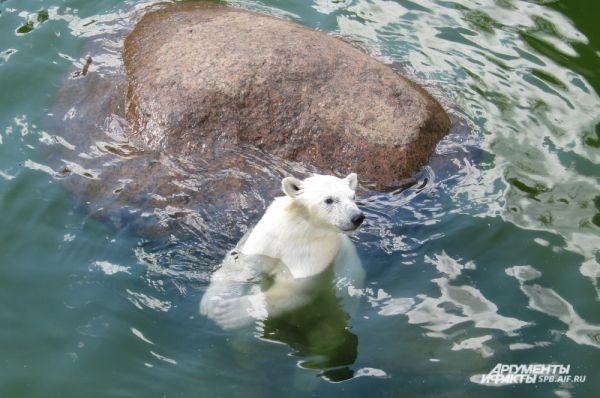 Забава заметила ледяной торт в руках сотрудника зоопарка.
