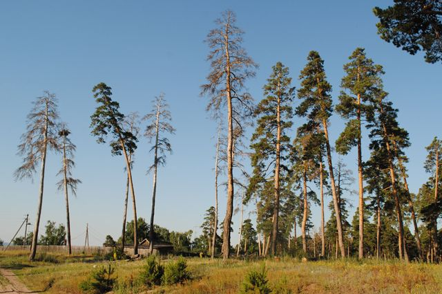 В лесах Омской области собираются навести порядок.