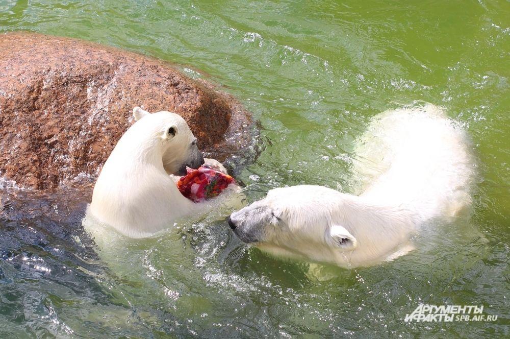 Услада и Забава получают каждая по ледяному торту