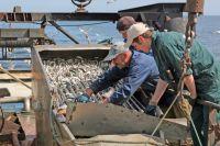 Рыбаки борются не только с браконьерами, но и с бюрократией.