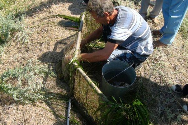 Рыбоводы готовят юных осетрят и стерлядок к выпуску в Волгу через специальный рыбоходный рукав.