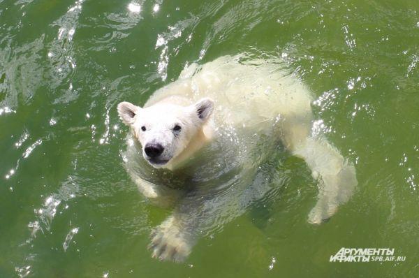 Медвежонок Забава родилась 6 декабря 2013 года.